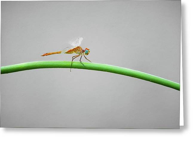 Female Neon Skimmer Greeting Card by Steven Michael