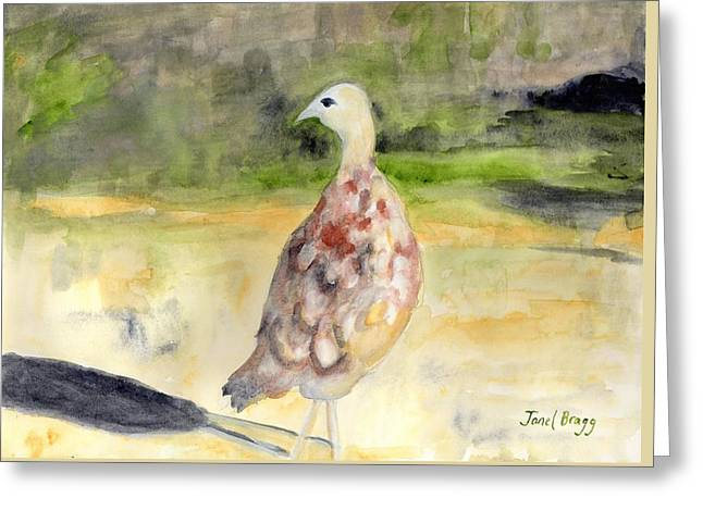 Female Pheasant Greeting Card by Janel Bragg
