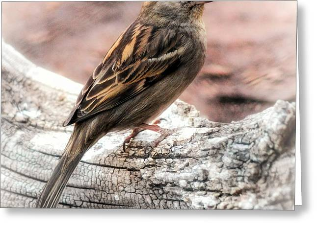 Female Sparrow Greeting Card