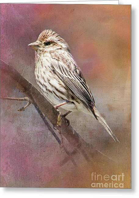 Female Sparrow On Branch Ginkelmier Inspired Greeting Card