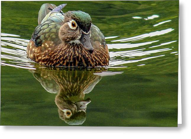 Greeting Card featuring the photograph Female Wood Duck by Jean Noren