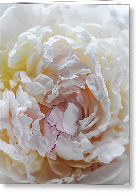 Feminine Abstraction Greeting Card