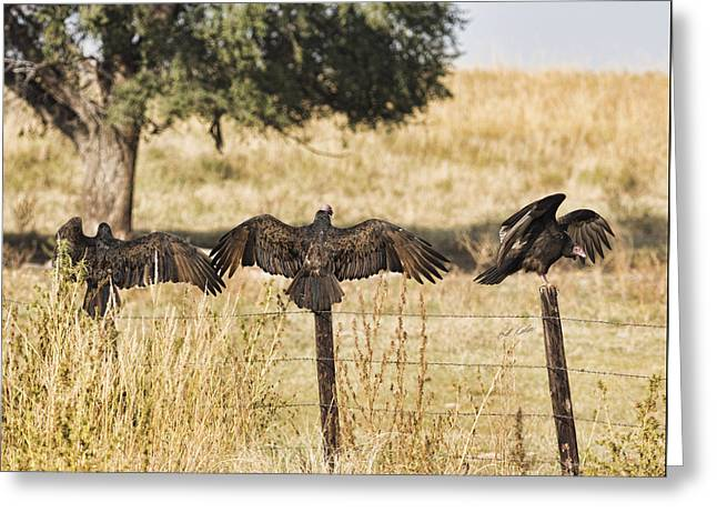 Greeting Card featuring the photograph Fence Post Vultures by Bill Kesler