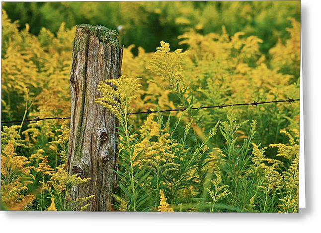 Fence Post7139 Greeting Card by Michael Peychich