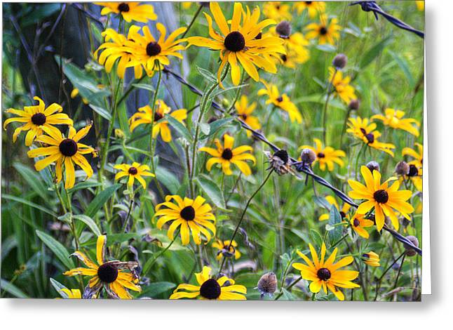Fence Row Flowers Greeting Card by Pete Hellmann
