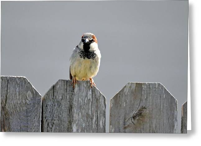 Greeting Card featuring the photograph Fence Sitting  by Teresa Blanton