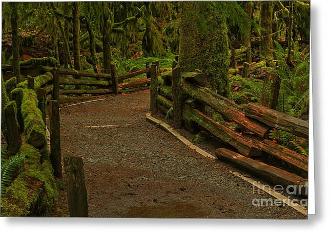 Fence Through The Forest Greeting Card by Adam Jewell