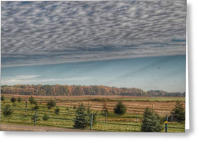 9017 - Fences, Firs And Fall Greeting Card