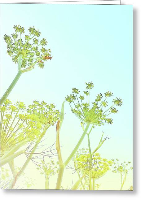 Greeting Card featuring the photograph Fennel As High As An Elephant's Eye by Cindy Garber Iverson
