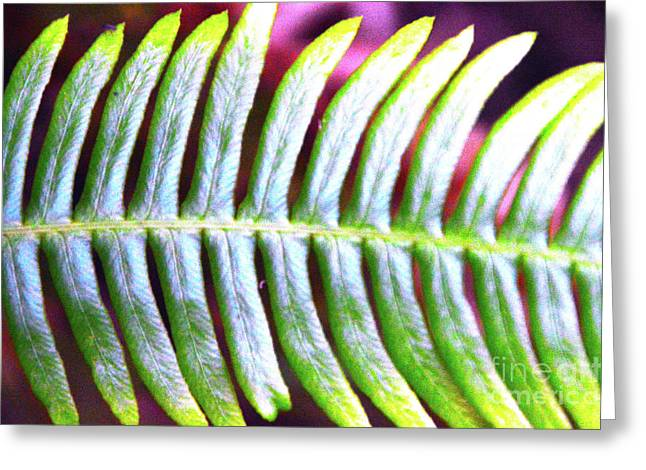 Fern 1 Greeting Card