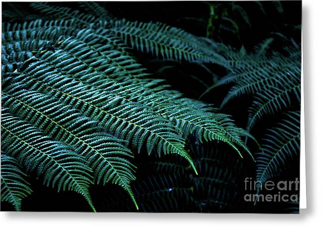 Patterns Of Nature 6 Greeting Card