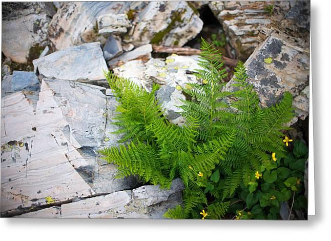 Fern Among Glacial Rock Greeting Card