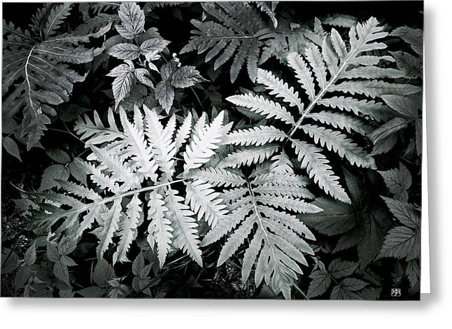 Fern At Bald Rock Greeting Card