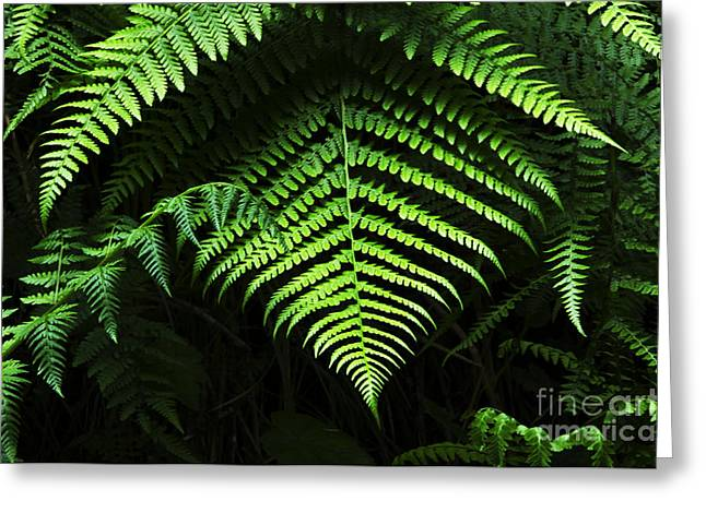 Fern Canyon California 1 Greeting Card by Bob Christopher