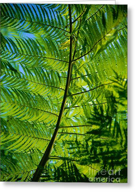 Fern Detail Greeting Card by Himani - Printscapes