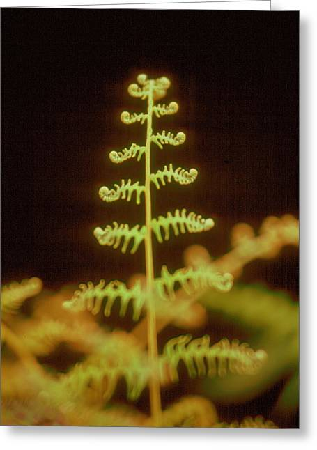 Greeting Card featuring the photograph Fern by Douglas Pike