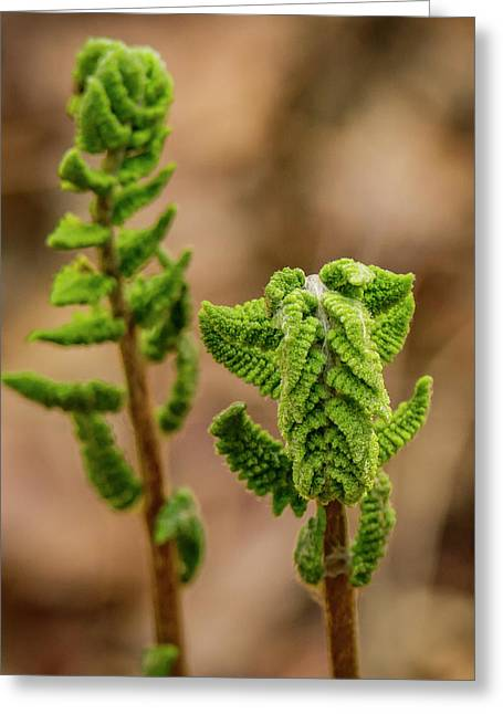 Fern Duo Greeting Card by Jean Noren