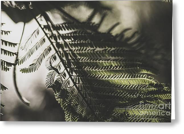Fern Dusk Greeting Card by Jorgo Photography - Wall Art Gallery