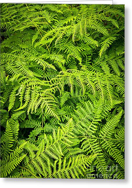 Fern Greeting Card by Elena Elisseeva