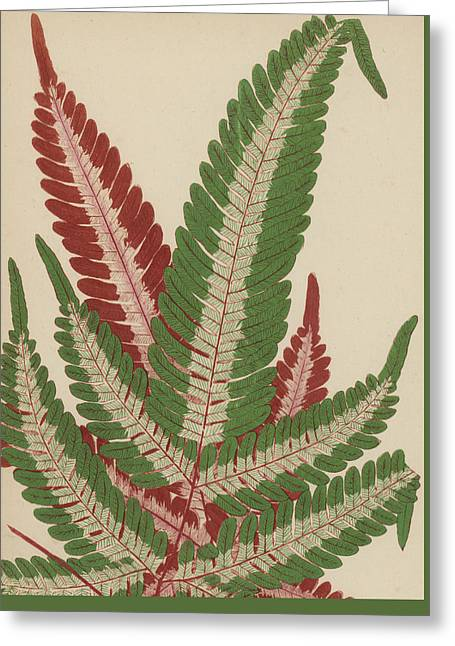 Fern Greeting Card by English School