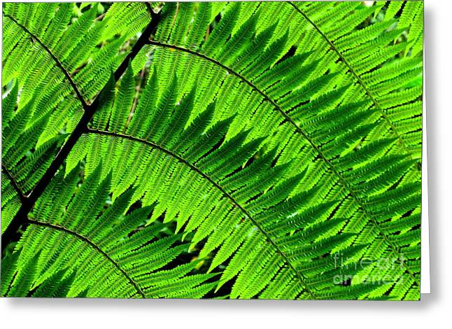 Fern In Afternoon Light Greeting Card by Ranjini Kandasamy