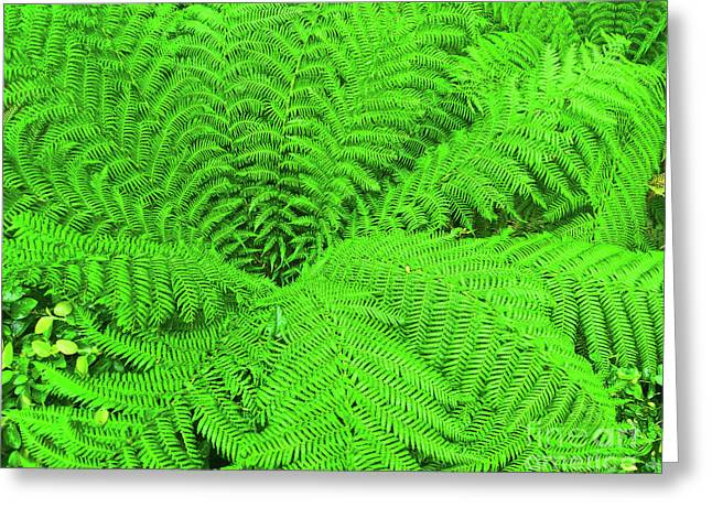 Fern Greeting Card by James  Dierker
