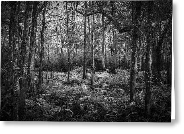 Fern Lace B/w Greeting Card by Marvin Spates