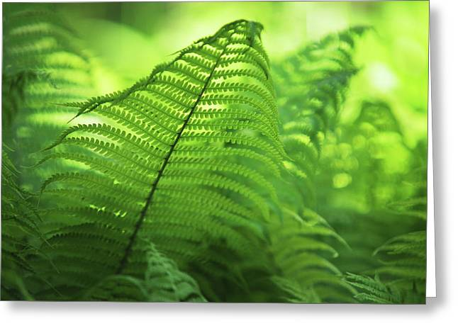 Fern Leaves 1. Green World  Greeting Card