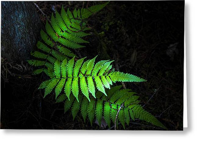 Fern Life Greeting Card by Marvin Spates
