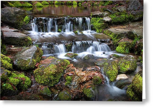 Fern Springs Greeting Card by Ralph Vazquez
