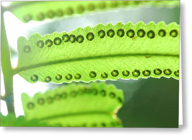 Fern Greeting Card by Susette Lacsina
