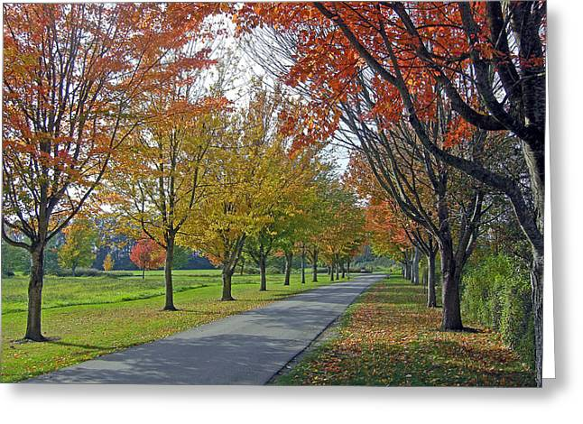 Ferndale Fall Colors Greeting Card by Matthew Adair