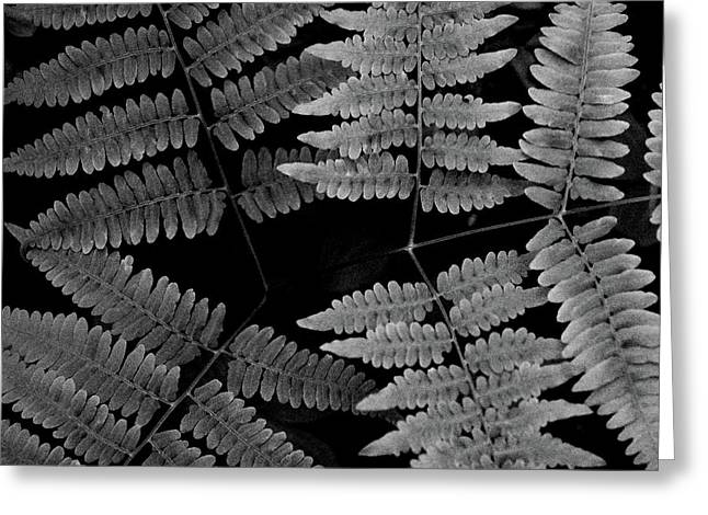 Greeting Card featuring the photograph Ferns by Alana Ranney