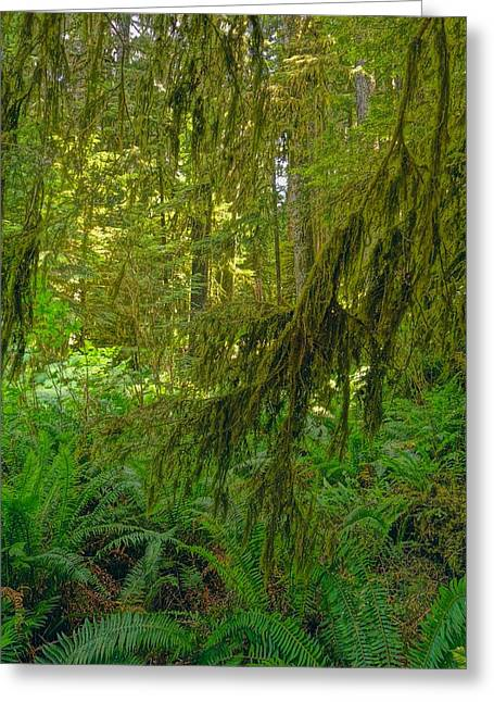 Ferns And Moss In Hoh Rainforest Greeting Card by Dan Sproul