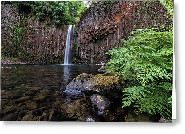 Ferns And Rocks By Abiqua Falls Greeting Card by David Gn