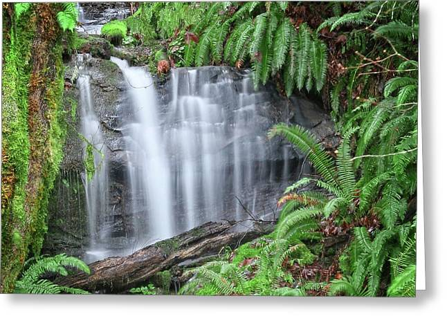 Ferns And Waterfalls Greeting Card