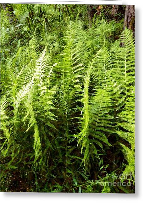Ferns - Foresta Verde - The Forest Floor Greeting Card