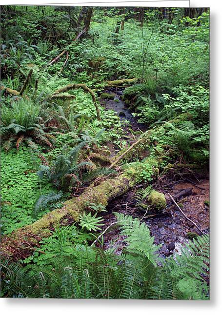 Greeting Card featuring the photograph Ferns Galore by Ben Upham III