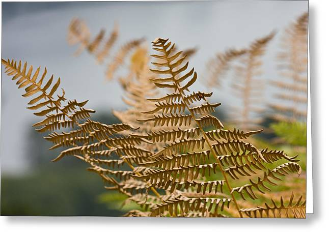 Ferns Growing By The River Greeting Card by Barbara  White