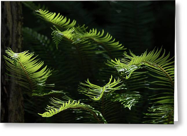Ferns In The Forest Greeting Card