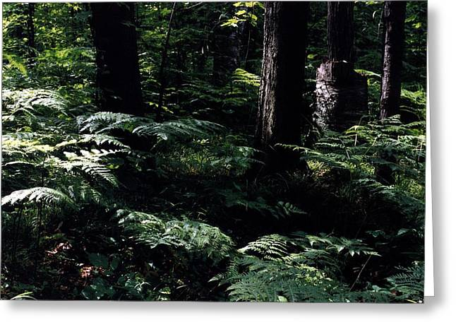 Greeting Card featuring the photograph Ferns In The Forest Wc by Lyle Crump