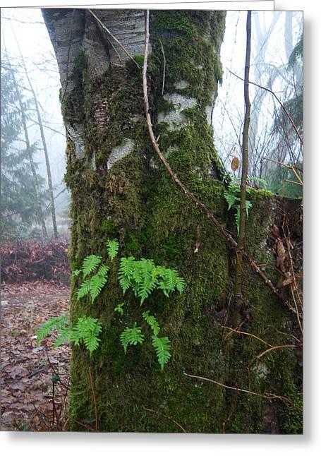 Ferns On A Foggy Day Greeting Card by Ken Day