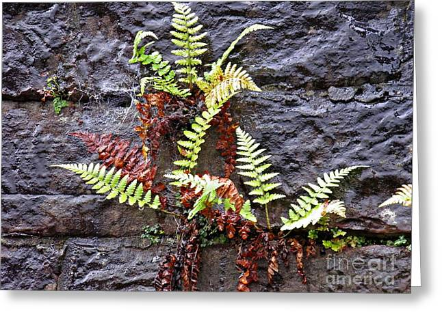 Ferns On The Wall Greeting Card by Sarah Loft