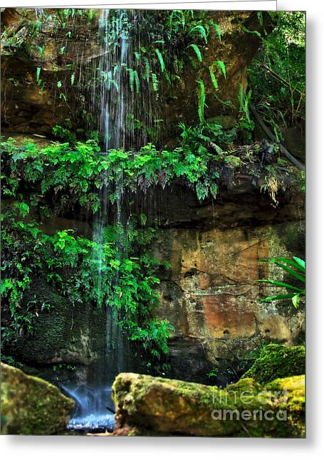 Ferns Under A Waterfall Greeting Card by Kaye Menner