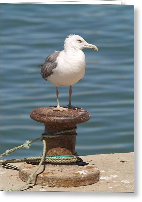Greeting Card featuring the photograph Ferragudo Seagull At Rest by Michael Canning
