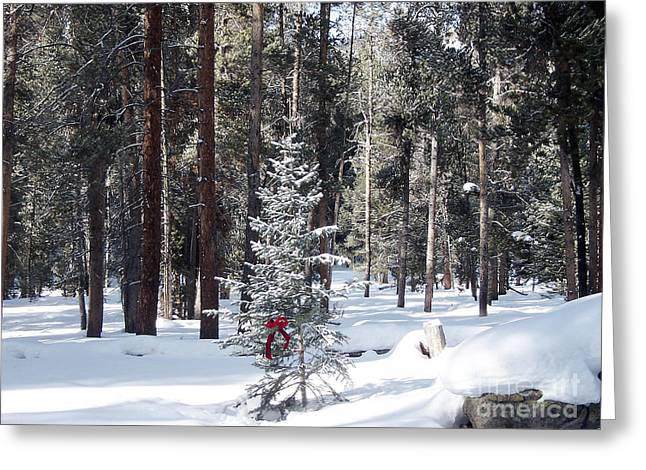 Festive Forest Greeting Card