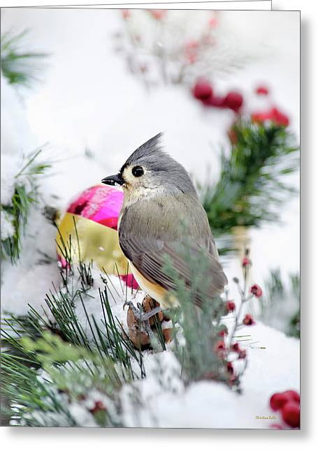 Festive Titmouse Bird Greeting Card by Christina Rollo