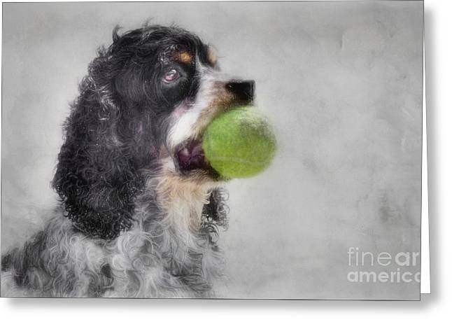 Greeting Card featuring the photograph Fetching Cocker Spaniel  by Benanne Stiens