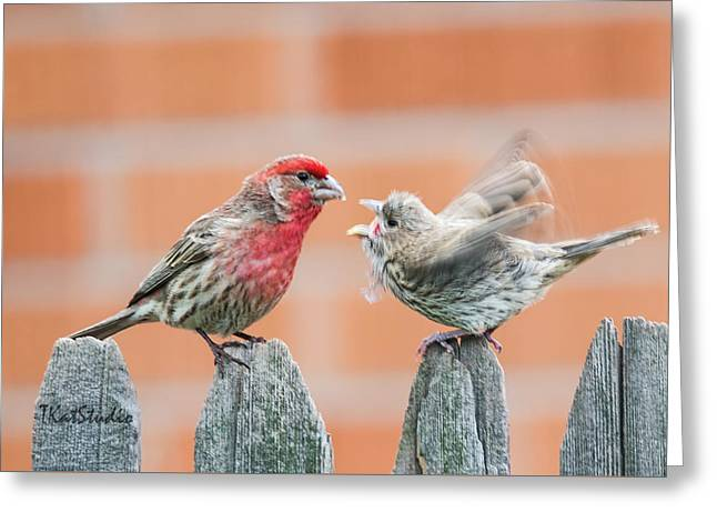 Feuding Finches Greeting Card
