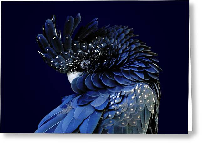 Fibonacci Cockatoo Greeting Card